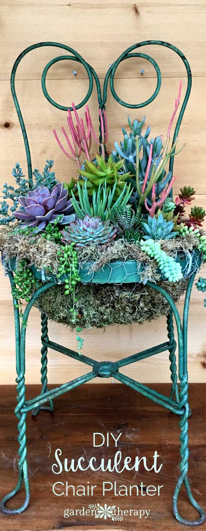 What an incredibly vivid use of an old metal chair! Find out how to DIY your own succulent chair for the front garden at Garden Therapy