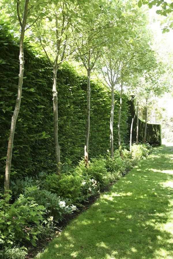 backyard landscaping ideas layout10