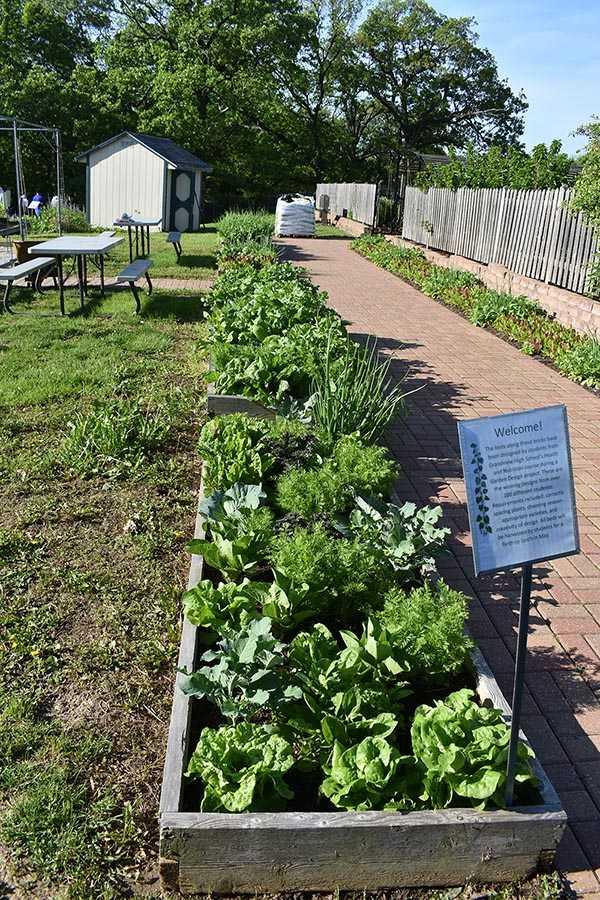 vegetable garden design1