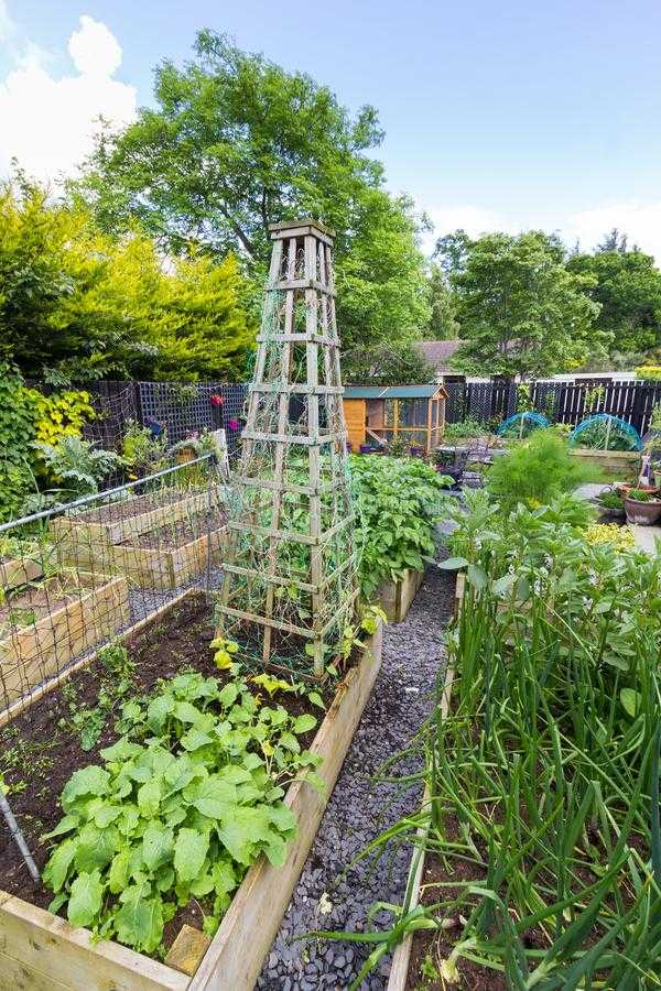 vegetable garden design10