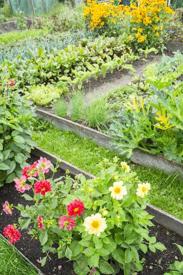vegetable garden design11