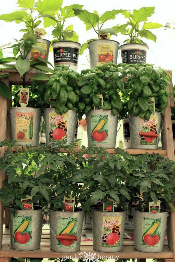 vegetable garden design18