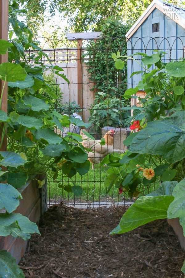 vegetable garden design19