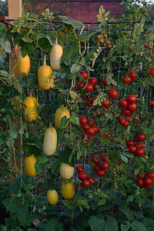 vegetable garden design20
