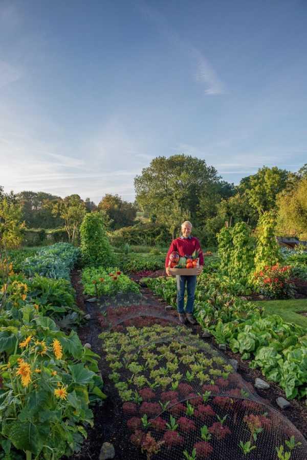 vegetable-garden-design25