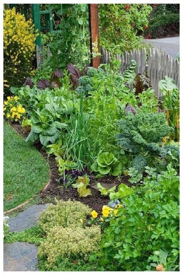 vegetable garden design4