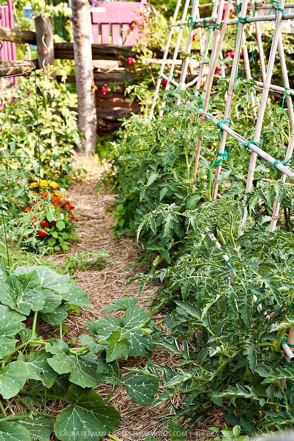 vegetable-garden-design7